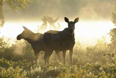 Safari animalier en Suède