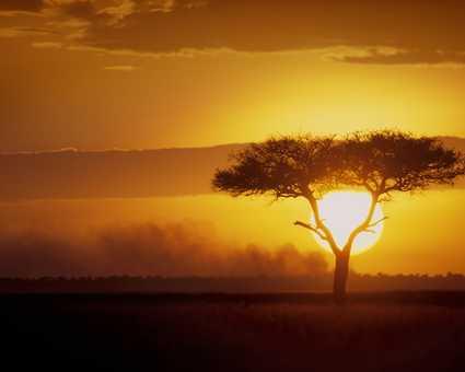 Coucher de soleil sur un acacia dans la plaine du Serengeti