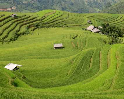 Rizières du Tonkin, nord vietnam, Tonkin