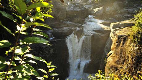 Au Parc national de la Montagne d'Ambre dans le Nord de Mada