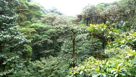 Forêt tropicale de la réserve Bosque Nuboso à Monteverde
