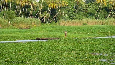 homme en bateau dans les backwaters