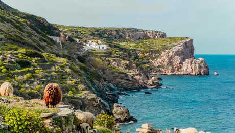 Randonnée à Sifnos, moutons en bord de mer
