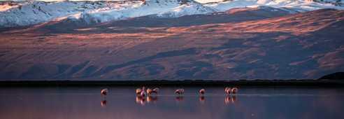 Coucher de soleil dans la réserve Laguna Nimez, sur le Lac Argentino à El Calafate
