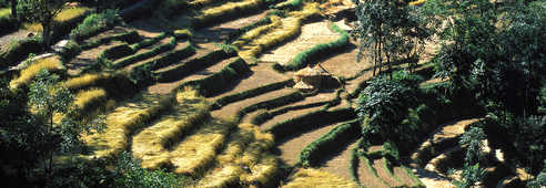 Cultures en terrasses, dans le massif des Annapurnas