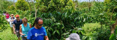Randonnée dans les plantations de café à Java