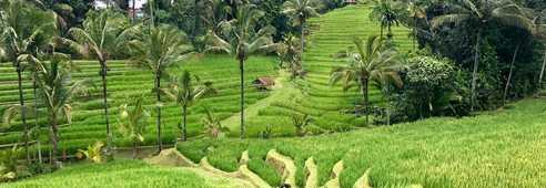 Randonnées au milieux des rizières de Belimbing, Bali, Indonésie
