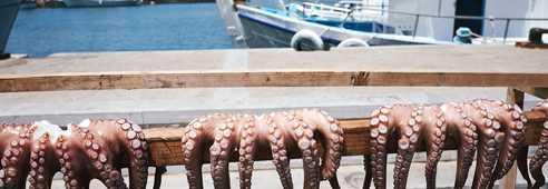 Voyage rando et gastronomie dans les Cyclades
