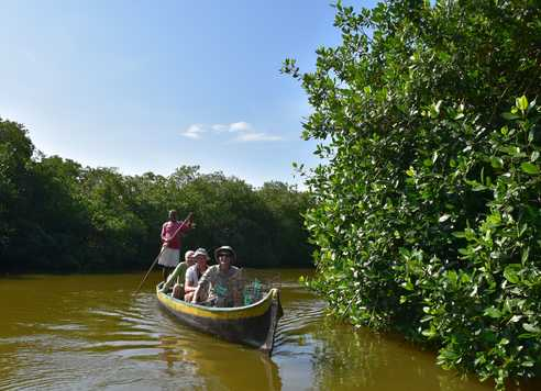 Découverte de la mangrove à la Boquilla
