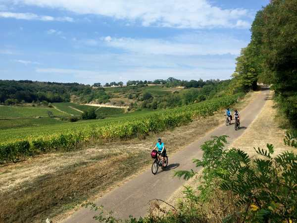 Cyclistes en descendant dans les vignes