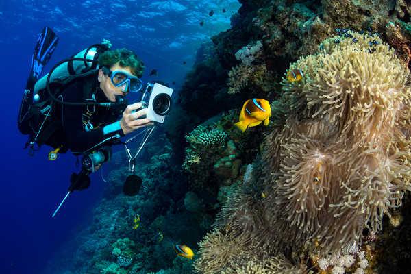 Plongeur photographiant les poissons-clowns en Mer Rouge
