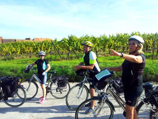 cyclistes dans les vignes en alsace