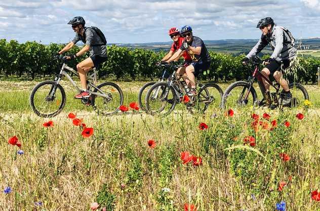 cyclistes dans la campagne entre les vignes et un champ fleuri