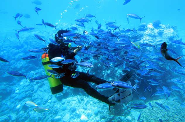 Plongeur dans un nuage de poissons en Mer Rouge