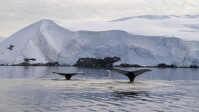 Photo d'un baleine en antarctique