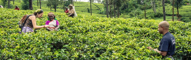 Apprendre la culture du thé au Sri Lanka avec les locaux