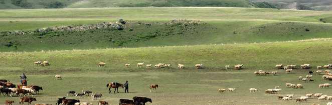 Bergers à cheval et leurs troupeaux de vaches et moutons