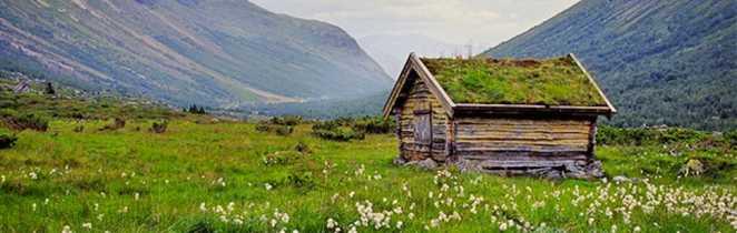 Cabane en bois avec toit végétalisé