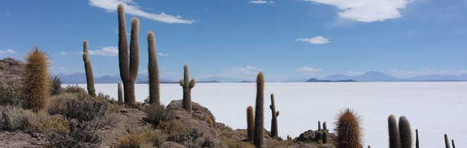 Cactus sur l'île d'Incahuasi dans le salar d'Uyuni