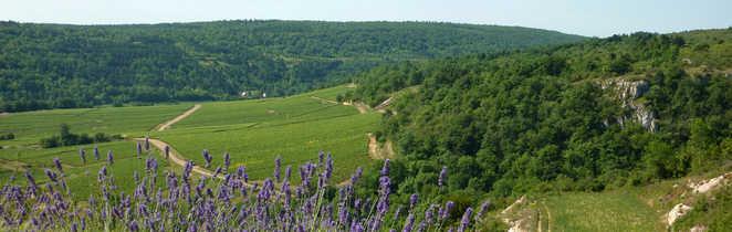 vue sur la campagne de bourgogne sud