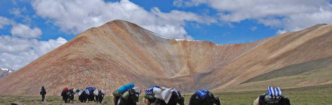 Caravane de yaks sur les plateaux tibétains