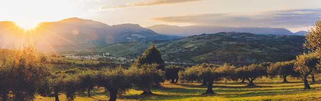 Coucher de soleil sur un champ d'olivier au loin les montagnes, la campagne et un village