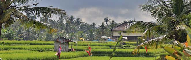 Ciel d'orage sur les rizières de Bali