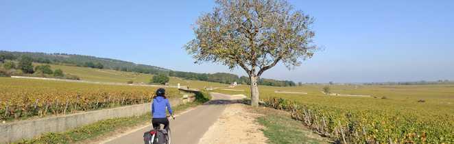 Cycliste dans la côte de beaune sur la route entre les vignes