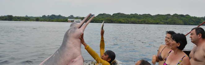 Dauphin rose en Amazonie