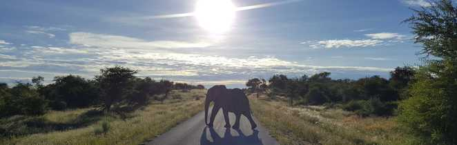 Éléphant dans le parc Etosha en safari