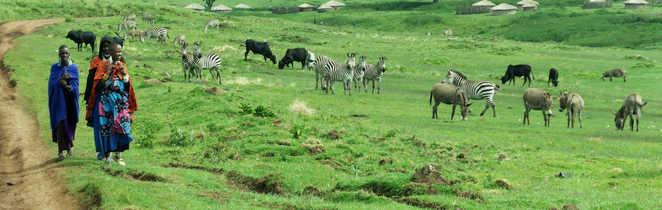 En pays Masai, faune sauvage et apprivoisée se mêlent ...
