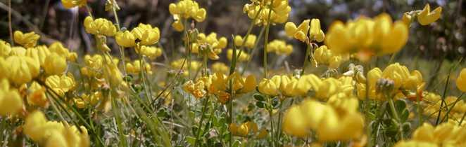 Fleurs sur le plateau causse du Larzac