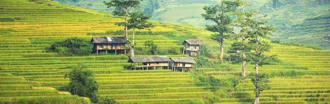 Les rizières en terrasses du nord Vietnam