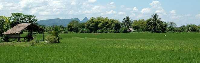 Les rizières en Thaïlande