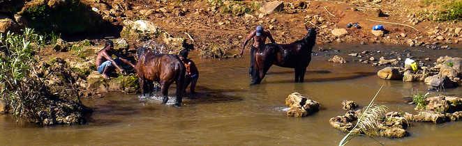 Madagascar à Cheval, douche des chevaux dans la rivière