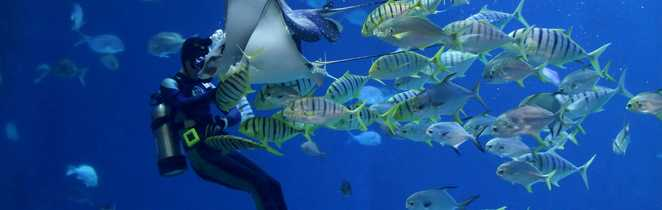 Plongée dans les Tuamotus