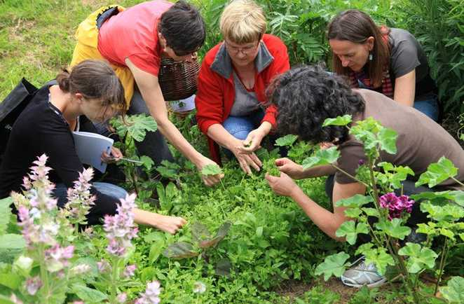 Auvergne, cueillette de plantes sauvages comestibles