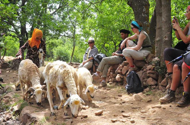 Bergère et ses moutons, Maroc