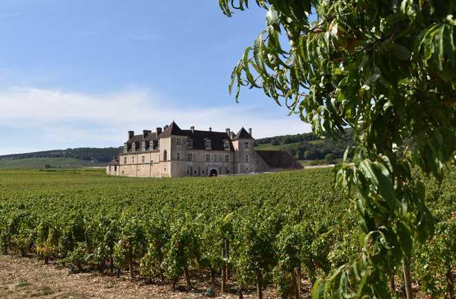 Château du clos de vougeot entre les vignes