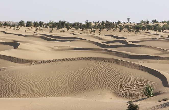 Dunes du désert du Thar, Rajasthan