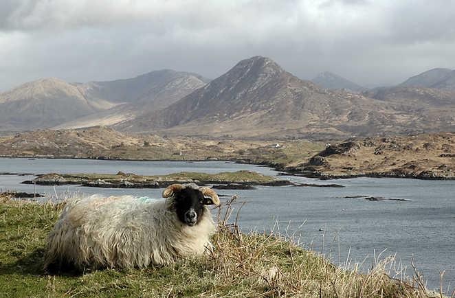 Irlande, Mouton et Connemara