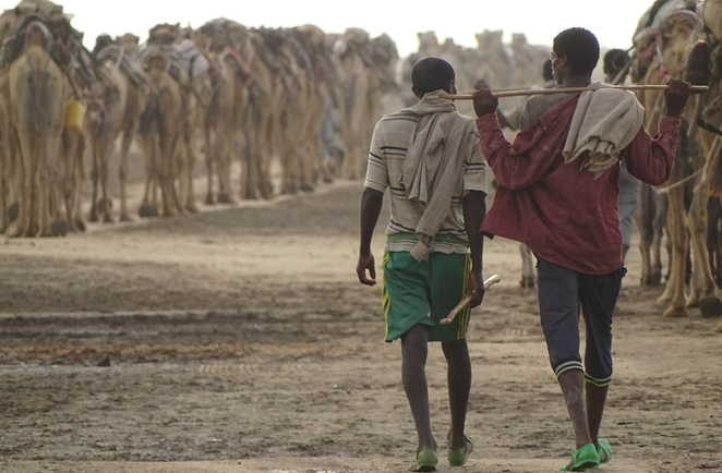 La caravane de sel : Les afars et les chameaux dans la région du Dallol