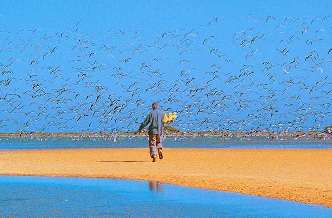 Le Banc d'Arguin et ses milliers d'oiseaux, Mauritanie