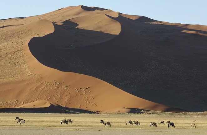 Namib et antilopes