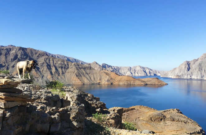 Paysage du Musandam à Oman