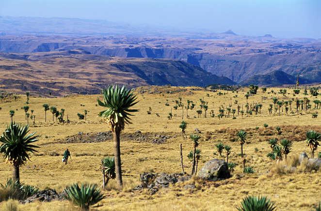 Paysage du parc national du Simien en Ethiopie