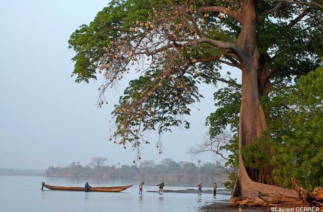 Pirogue sur un fleuve en Casamance au Sénégal