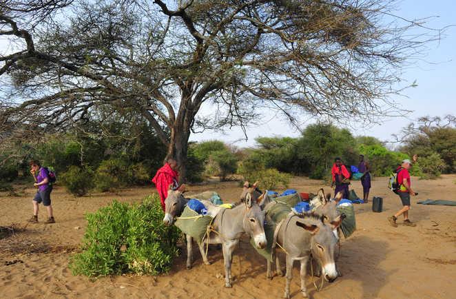 Portage du campement par les ânes