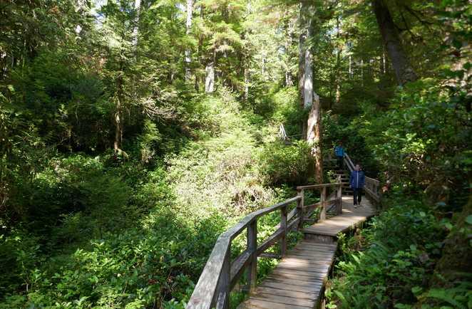 Randonnée dans la forêt pluviale de l'île de Vancouver