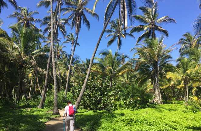 Randonnée dans le parc Tayrona